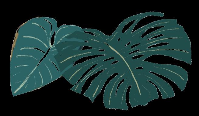 Illustrated jungle leaves